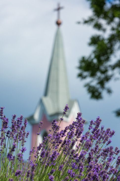 Lavender - Red