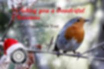 Robin-Spring 17_edited.jpg