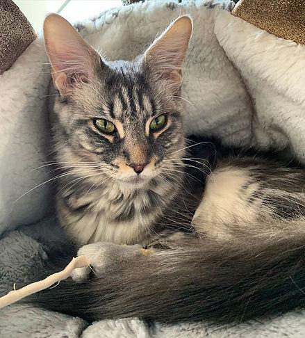 Cosy cat 🖤 #ladygrey #mygirl #mylove #m