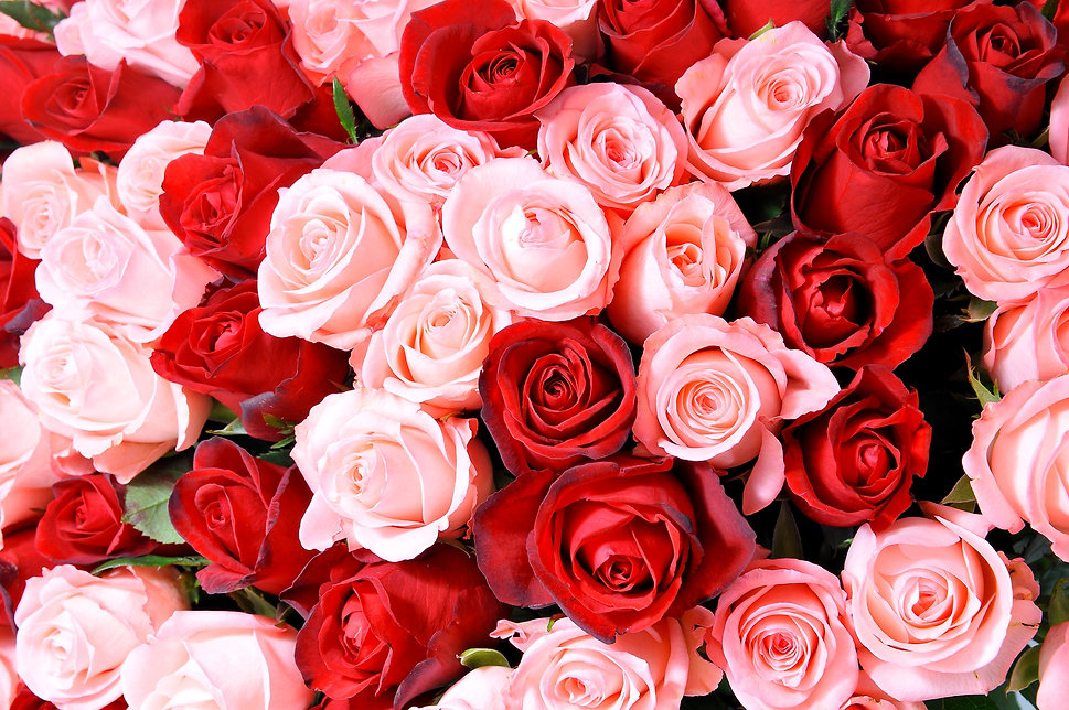 pink%20and%20red%20roses_edited.jpg