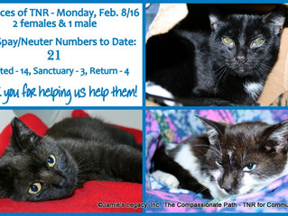 21 Spay/Neuters to Date for 2016