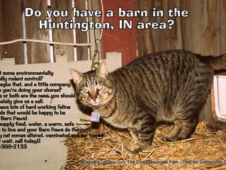 Need a Barn Cat?