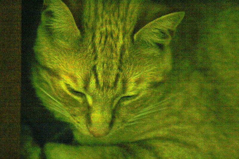 Ralph 4 Photo Card