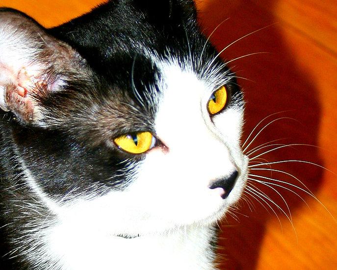 Dexter 1 Photo Card