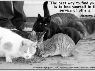 In the Service of Others