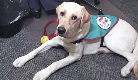 Service Animals and Physician Practices