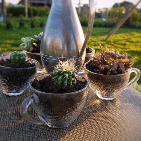 Glass Succulents