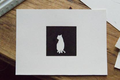 white cat with black box.jpg