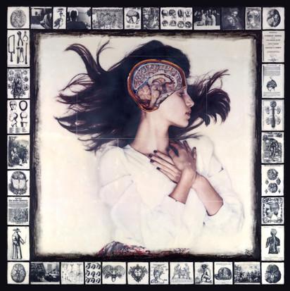 Brain, stem