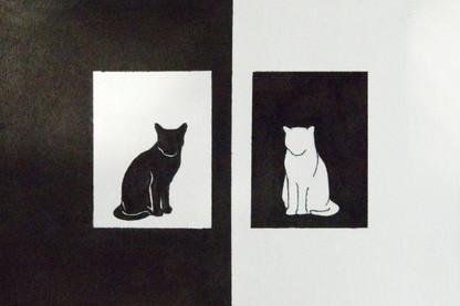 white cat black cat.jpg
