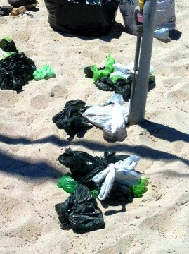 Save Our Shores: 'Staggering' increase in bags of dog waste abandoned on Carmel Beach