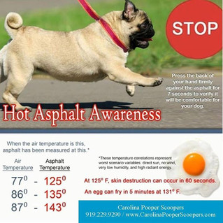 Atlanta, Georgia's Hot Asphalt and Dog Paws (black top dangers)