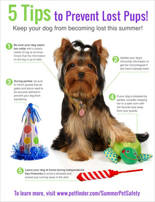 Keep your pooch safe July 4th!