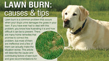 Yellow Lawn Urine Burns 101