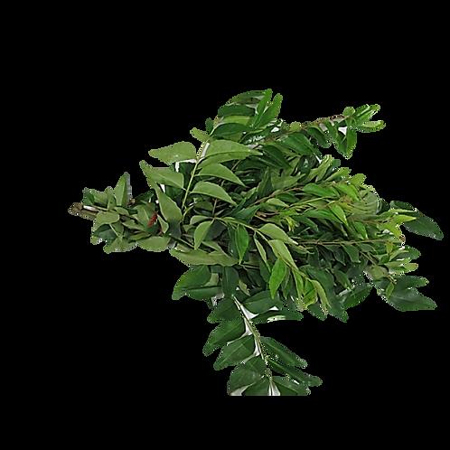 Kadi Patta (Curry Leaf)
