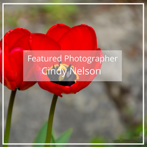 Cindy Nelson: Featured Photographer