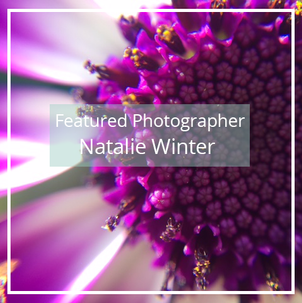 Natalie Winter: Featured Photographer