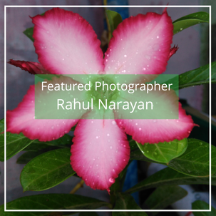Rahul Narayan: Featured Photographer