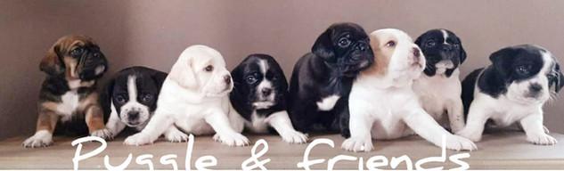 Pups%202e%20nest%20Lucy%20%26%20James_ed