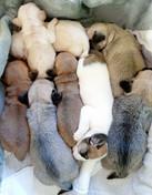 Pups Pippa & James