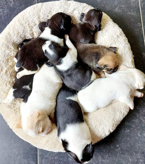 Pups 2e nest Lucy & James
