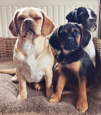 Mia, Rosie & Lucy