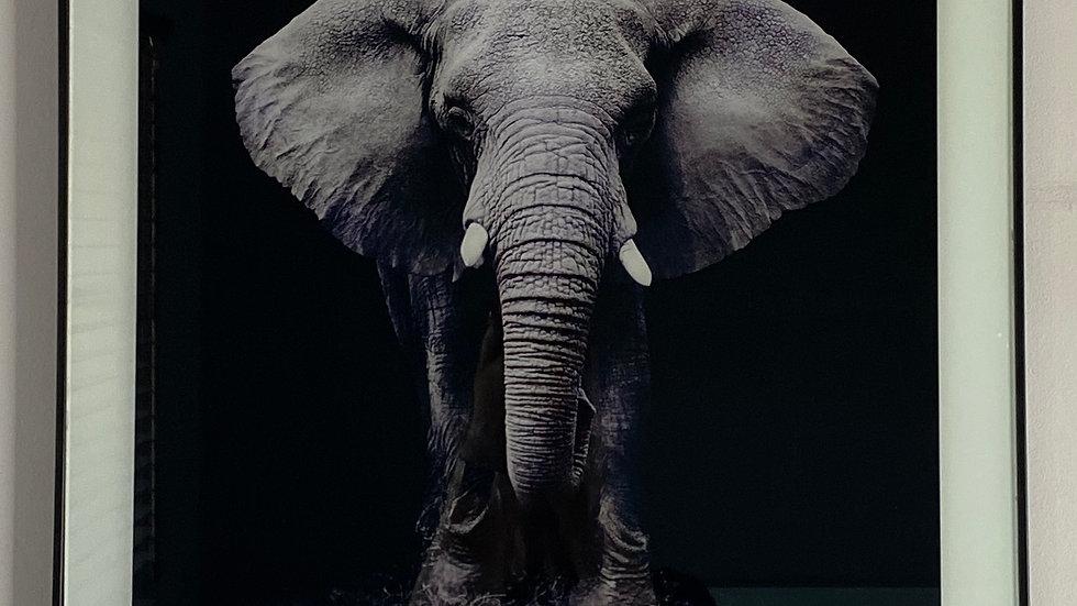 Elephant Glass Porrtrait