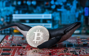 Whale figure holding silver Bitcoin on r