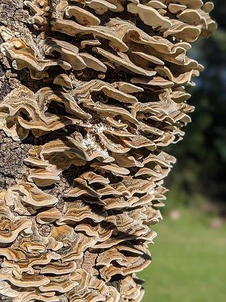 More Fungi.jpg