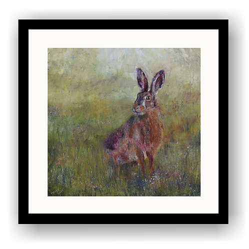 Meadow Hare