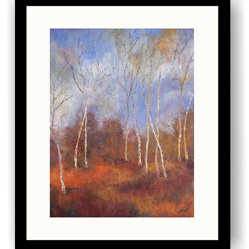 Young Birch, Sherwood