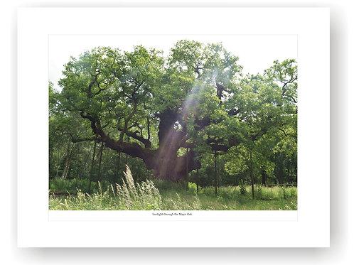 Sunlight through the Major Oak