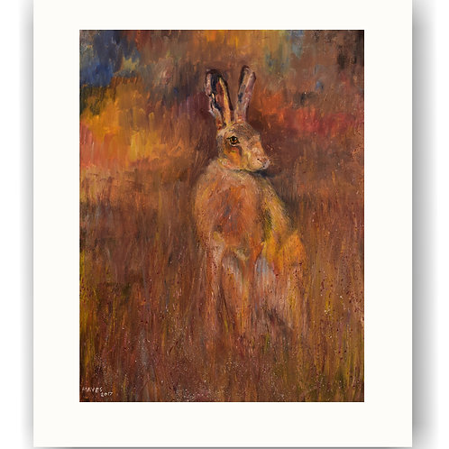 Hare in Evening Sunlight