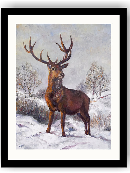 RedStag in Winter