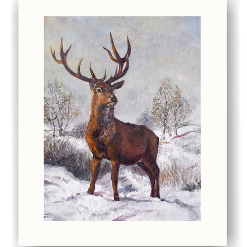 Red Stag in Winter