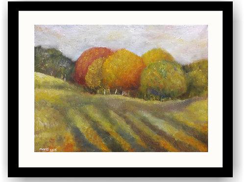 Autumn Trees & Shadows