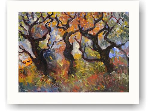 Sherwood Trees in Sunlight