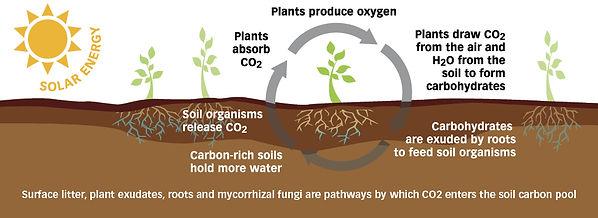 carbon-cycle-slider.jpg