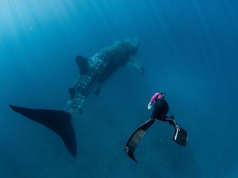 whalesharktail.jpeg