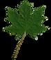 leaf_png.png