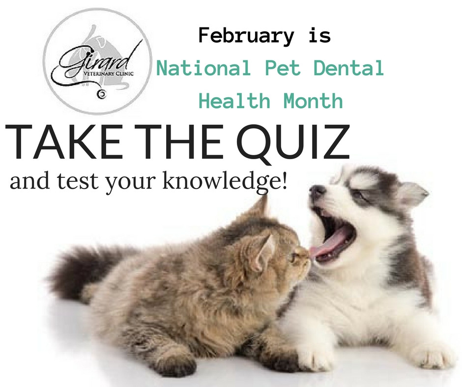 TAKE THE QUIZ : How Much Do You Know About Your Pet's