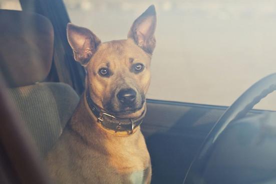Dog left inside parked car