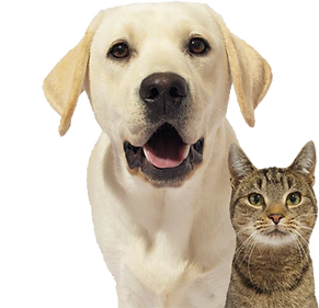 dog and cat no backgroud.png