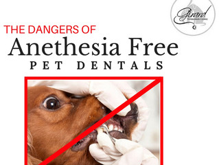Does my pet really NEED anesthesia for a dental?