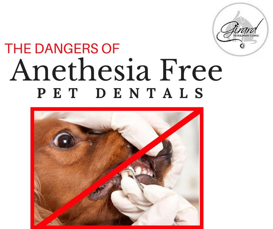 Anesthesia Free pet dental
