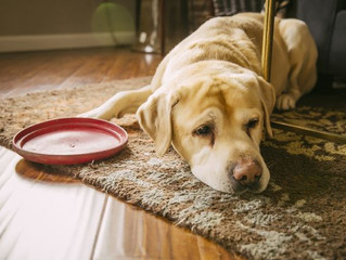 Got the Winter Blues? Signs show your pets can get them, too!
