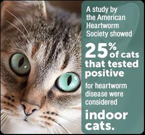 cats get heartworm too