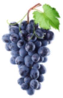 derschwarzesekt, vinospumantenero, sekt, postvinum, schwarz, sparklingwine, black, schwarzerSekt, winelover, qualitätsschaumwein, black wine