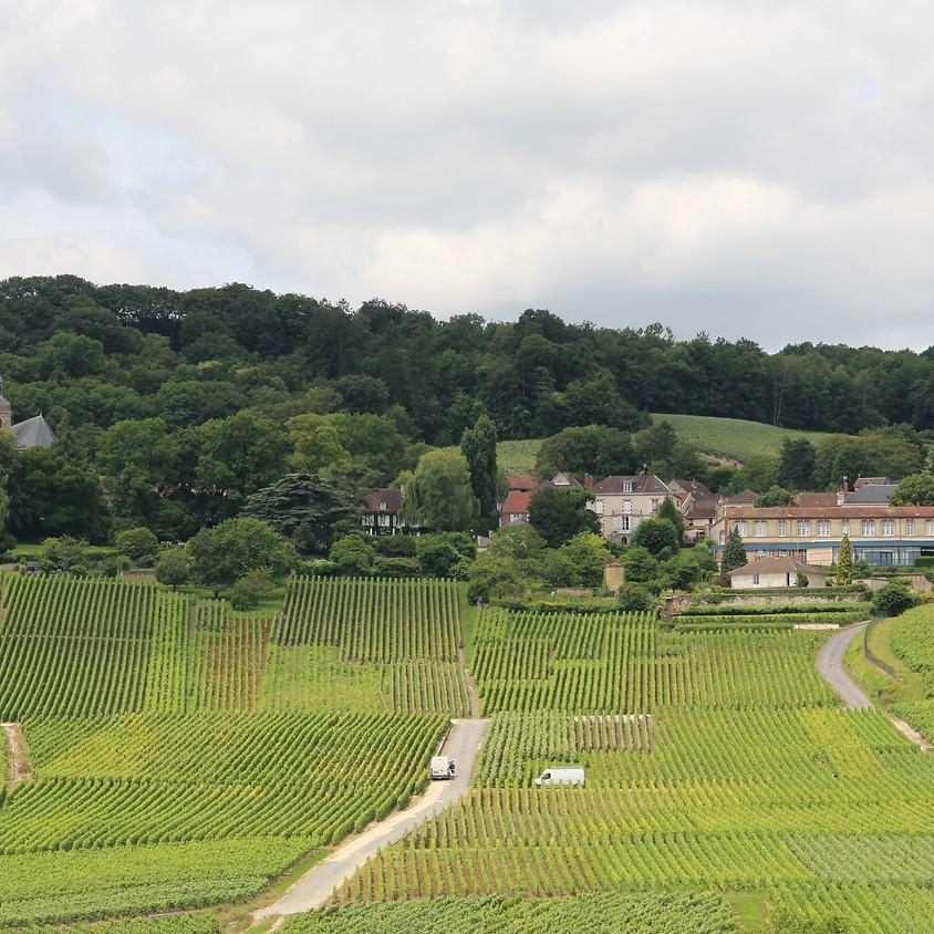 Maîtrisez les  spécificités de la Conv. coll. des exploitations viticoles de la Champagne