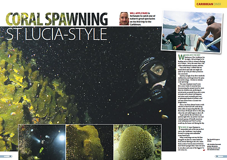 Coral Spawning St Lucia, a feature for DIVER magazine